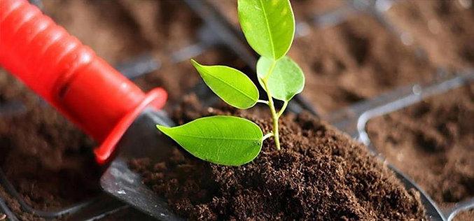 Торф для растений